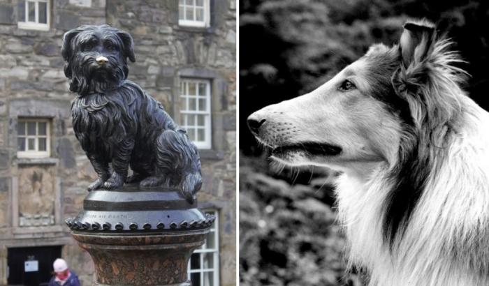 Cамые известные псы в истории.